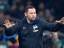 """Herthas Trainer Pal Dardai will gegen kämpfende Mainzer """"unbedingt gewinnen"""""""