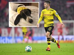 Pulisic (re.) wollte unbedingt mit seinem Hund feiern (Bildquelle: Twitter @cpulisic_10)