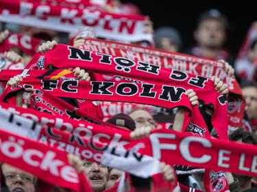 Fans des 1. FC Köln sorgen immer wieder für Ärger
