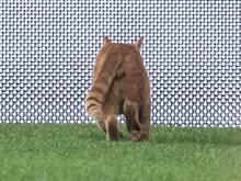 Beim Champions-League-Spiel in Istanbul verirrte sich eine Katze auf das Spielfeld