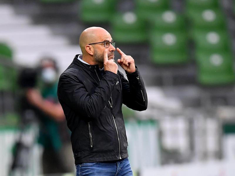 Hat mit Leverkusen die Gladbacher Borussia vor Augen: Bayer-Coach Peter Bosz