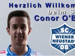 Conor O'Brien die Neuverpflichtung des SC Wiener Neustadt
