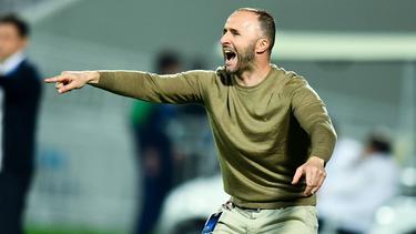 Djamel Belmadi wird neuer Nationaltrainer Algeriens