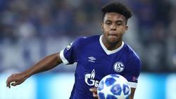 Weston McKennie soll das Gesicht von Schalke 04 werden