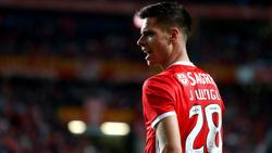 Julian Weigl wechselte vor knapp einem Jahr vom BVB zu Benfica