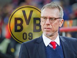 Peter Stöger ist Borussia-Dortmund-Trainer