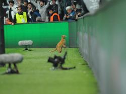 Der Auftritt einer flitzenden Katze sorgte in der Champions League für Aufsehen