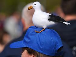 Ob die Seagulls am Ende doch wieder allen anderen am Schädel sch***?