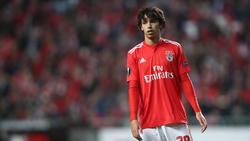 Wechselt für 126 Millionen Euro zu Atlético Madrid: Joao Félix