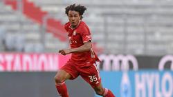 Joshua Zirkzee hat schon viermal für die Bayern getroffen