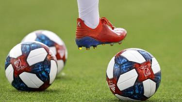 FC Toronto: Aligator stört Spieler beim Training