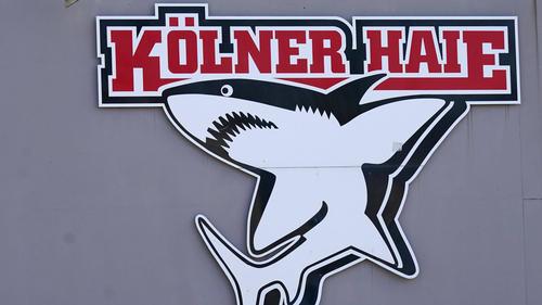 Bei den Kölner Haien gab es vier positive Corona-Tests