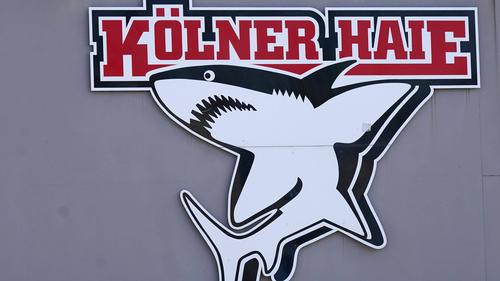Bei den Kölner haien gibt es einen Corona-Fall